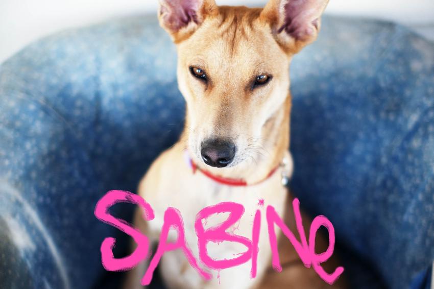SABiNE breathes new life onto SA's dance-floors